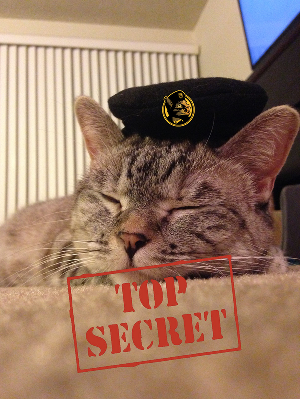 Blogging assignment: Join #ThePussycatRiot - Nala needs you on a TOP SECRET MISSION (Worldwide bloggers)