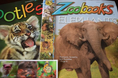 Blogger @craftcartwright UK Giveaway: Win a subscription to Zoobooks magazine for kids – Closes 5th June 2017