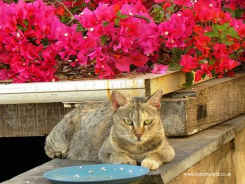 Guest Star: How I met My Zen Cat