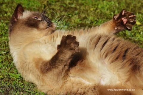 How to spot and treat Feline Lower Urinary Tract Diseases