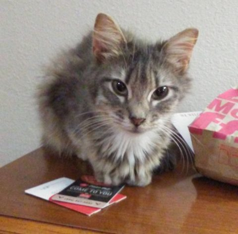 Purrsday Poetry: A little Gray Kitten